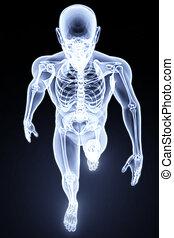 Menschliches Röntgen