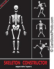 Menschliches Skelett. Knochen auf separatem L