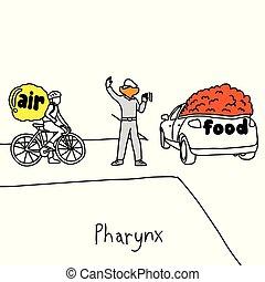 Metaphorfunktion von pharynx, um den Verkehr zu verwalten, wenn Lebensmittel zu der esophagus Vektorgrafik Zeichnung gezeichnet mit schwarzen Linien, isoliert auf weißem Hintergrund. Medizinisches Bildungskonzept.