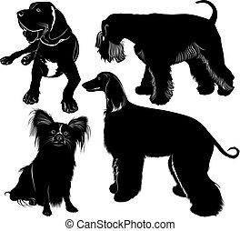 miniatur, schnauz, windhund, dogge