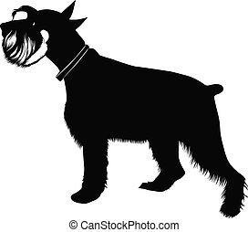 Miniatur-Schnauzer-Hund.