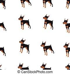 miniatur, vektor, pinscher, hund