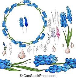 Mit blauer Muskari auf weiß.