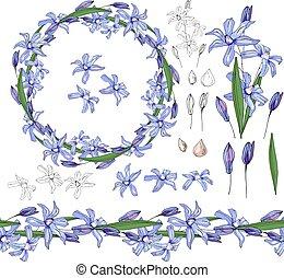 Mit blauer Primrose auf weiß.