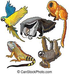 Mit Tieren aus Südamerika.