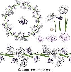 Mit unterschiedlichem Allium auf Weiß.