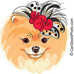 mode, pomeranian, rasse, hund, vektor, lächeln