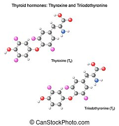 modell, hormone, schilddrüse