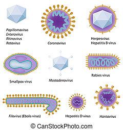 Morphologie gemeinsamer Viren, Eps8