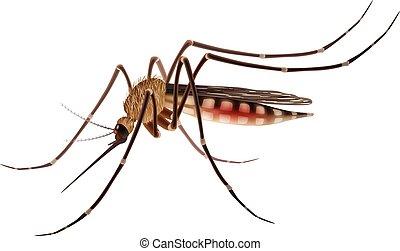 Mosquito realistische Illustration.