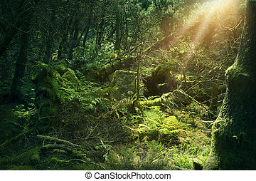 Mossy Holz in Irland.
