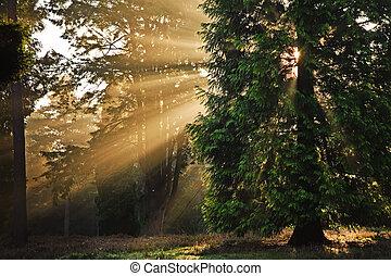 Motivations-Sonnenstrahlen durch Bäume im Herbst-Fall-Wald bei Sonnenaufgang