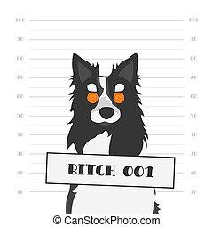 Mugshot eines hart umkämpften Hundes mit orangen runden Gläsern. Schlampe als weiblicher Hund von schwarzen und weißen Grenz-Collie.