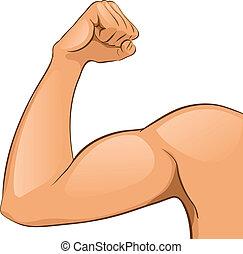 muskeln, arm, mannes