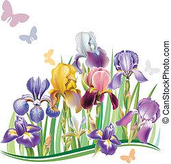Nahtlose Muster mit Iris.