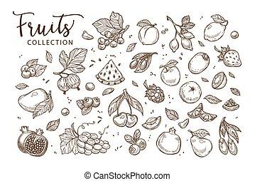 Natürliche, schmackhafte Früchte Sammlung von monochromen Sepia Zeichnungen