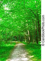 Natur. Wald im Sommer