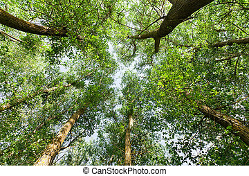 Natur. Wald