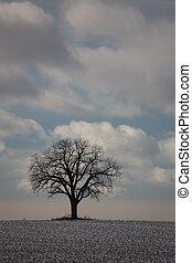 Natur, Winterbaum 01