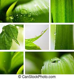 Naturgrüner Hintergrund.