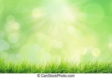 Naturlandschaft mit Gras.