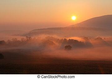Nebel mit Sonne, Bäume sind nass, feuchter Nebel des Waldes.