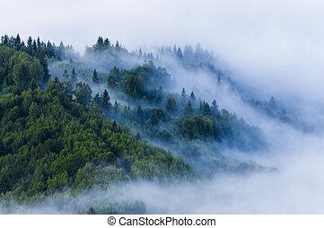 nebel, sommer, nebel, ansicht, frisch, morgen, forest., luftaufnahmen