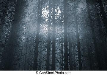 Nebelwald in Vollmondnacht.