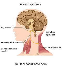 nerv, eps8, zubehörteil