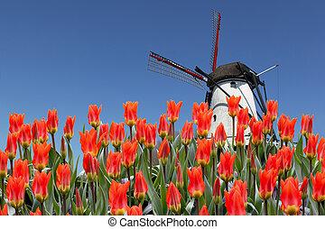 Niederländische Landschaft von Sägewerk und Tulpen