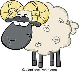 Niedliches schwarzes Kopf-Rammen Schaf.