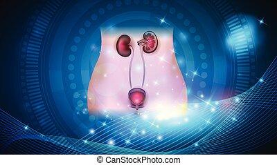 Nieren und Harnblase Gesundheitsfürsorge.