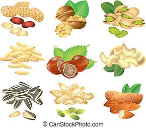 Nuts und Samenvektoren eingestellt