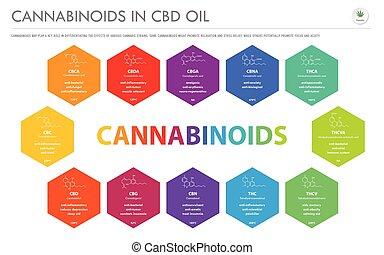 oel, cbd, cannabinoids, infographic, geschaeftswelt, strukturell, horizontal, formeln