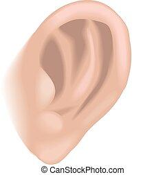 Ohren illustrieren