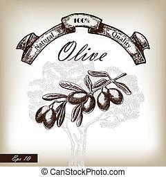 Olive Baum Zweig hand gezeichnet Illustration im Zeichnungsstil.