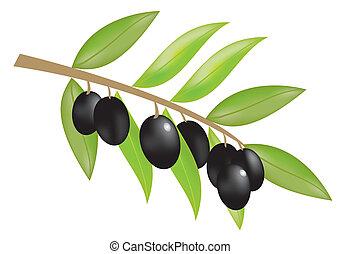 Olive Filiale