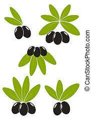 Oliven mit Blättern
