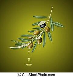 Olivenbaumzweig mit Öltropfen.