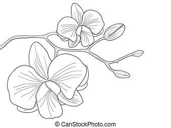 Orchideenblume