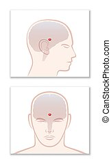 ort, gehirn, neuropsychology, pineal, drüse, epiphysis, cerebri
