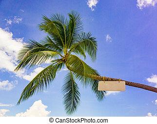 Palm mit einem Schild am Strand.