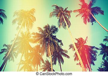 Palmen am Himmel am Strand.