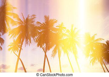 Palmen an tropischer Küste.