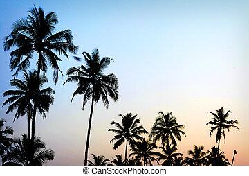 Palmen, Sonnenuntergang, goldblaues Himmellicht im Mittelmeer