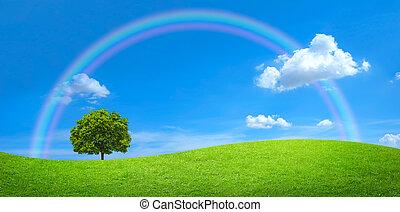 Panorama des grünen Feldes mit einem großen Baum und Regenbogen am blauen Himmel