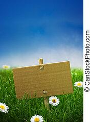 Pappezeichen in einem grünen Gartengras, Natur Hintergrund, leerer blauer Himmel, Gänseblümchen und ein Marienkäfer