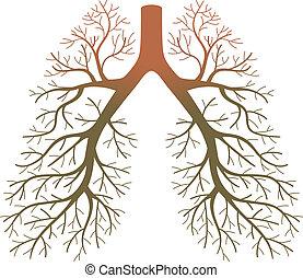 patienten, lunge