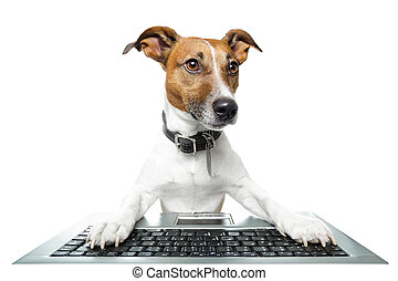 pc computer, hund, tablette