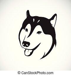 pet., hund, sibirisch, hintergrund., vektor, heiser, animal., weißes